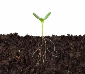 Cutaway of Plant Growing in Dirt